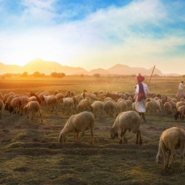Shepherding Talent Organization